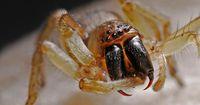 Forscher benennen neu entdeckte Spinnenart nach Harry Potter-Figur