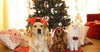 Deshalb sollte man zu Weihnachten keine Tiere verschenken