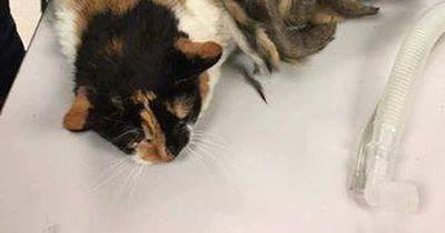 Diese Katze litt fürchterlich unter ihren Dreadlocks