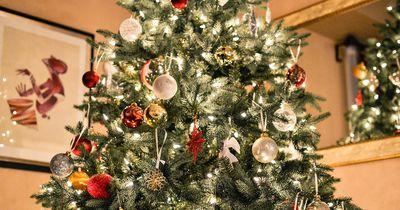 Lametta am Weihnachtsbaum entpuppt sich als Tigerotter