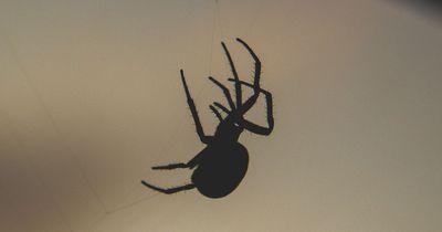 Tierschützer fordern mehr Toleranz gegen verhasste Spinnen