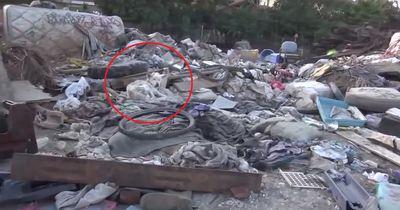 Hündin wurde herzlos auf Müllkippe entsorgt