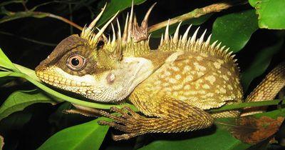Forscher entdeckten 163 neue Tier- und Pflanzenarten