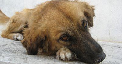 So kannst du den Straßenhunden in Rumänien helfen