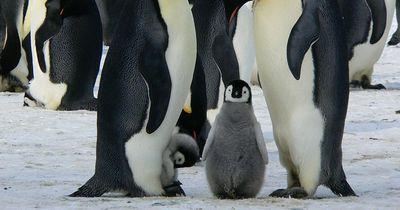 Im Winter sollten wir wie Pinguine sein