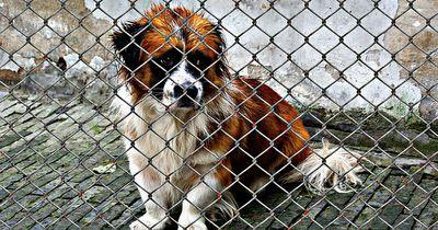 Traurige Bilanz in Tierheimen