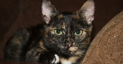 Katze in der Silvesternacht schwer verletzt