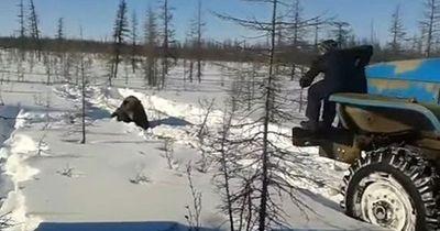 Grausames Video: Männer tun einem Bär grundlos unmenschlich Brutales an