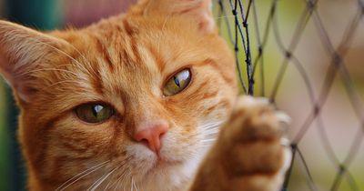Vorsicht: Deutschen Hauskatzen droht Ausgangssperre