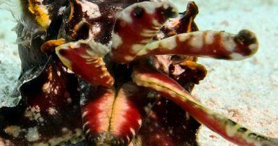 Dieses Tier sieht aus wie ein Mini-Unterwasser-Nilpferd