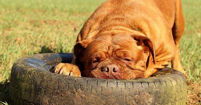 Herrchen vergrub seinen kranken Hund bis zum Hals in Erde