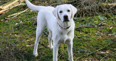 Wie gut verstehst du die Körpersprache (d)eines Hundes?