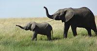 Dies sind die härtesten Mütter im Reich der Tiere