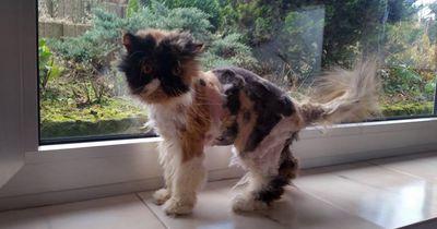 Diese Katze wurde in letzter Minute gerettet