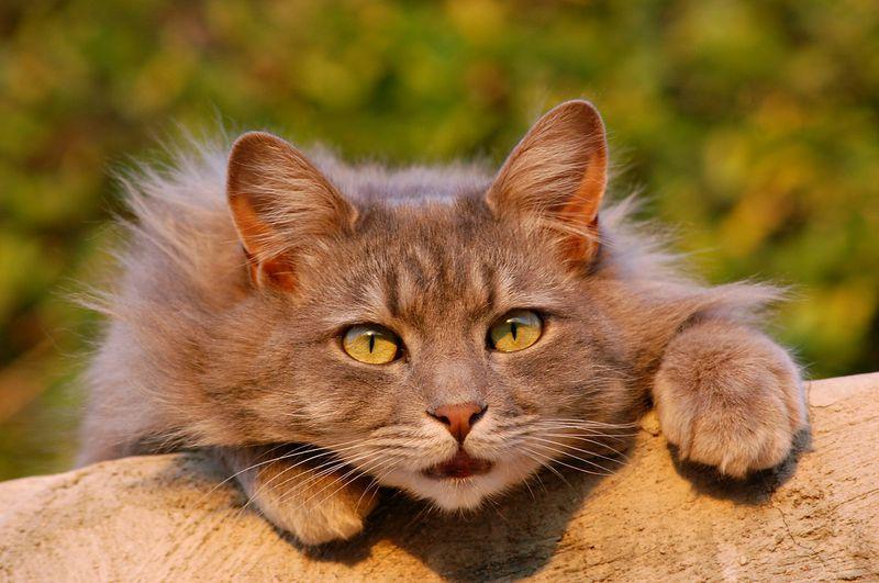 Dringend Zuhause gesucht: Wer rettet diese Katzen?