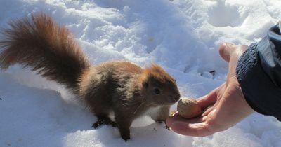 Brauchen Tiere im Winter eigentlich Hilfe?