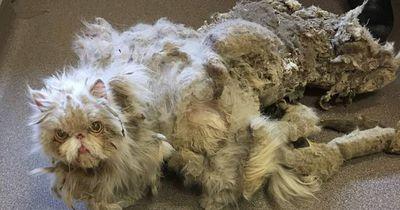 Kater mit fünf Kilogramm Fell am Leib gefunden