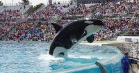 SeaWorld beendet doch nicht seine Wal-Shows