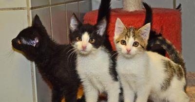 Helfer retten 50 Tiere aus verdrecktem Haus