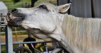 Deutsche Feuerwehr hilft kraftlosen Pferd wieder auf die Beine