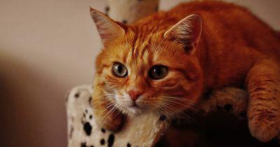 Diese unverschämten Dinge macht wirklich jede Katze