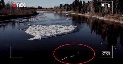 Ist das Monster von Loch Ness nun etwa nach Alaska ausgewandert?