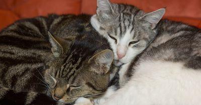 Unterschätzte Krankheit bei Katzen: Symptome rechtzeitig erkennen