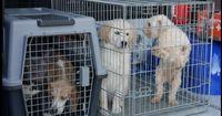 Hunde aus der Horrorzucht können nun vermittelt werden