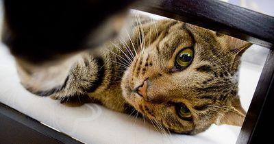 Deshalb kneten Katzen mit ihren Vorderpfoten