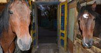 Sachsen-Anhalt: Behörde entzieht einem Mann 78 Pferde