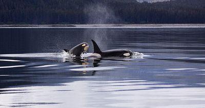 Das verraten uns Wale über unseren eigenen Körper