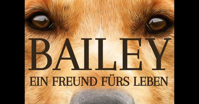 Tierquälerei bei Dreharbeiten zu neuem Hunde-Film