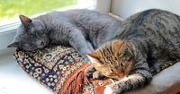 An Katzenbesitzer: Deshalb braucht ihr eine zweite Katze