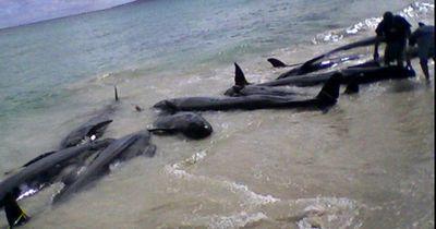 Mehr als 80 Delfine sterben an Floridas Küste