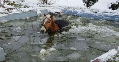 Cottbusser Feuerwehr rettet Pferd aus gefrorenem Pool