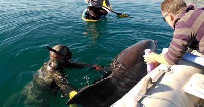 Delfin aus Fischernetz gerettet
