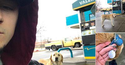 Er will einem obdachlosen Hund helfen, bis er sieht, was auf seiner Marke steht