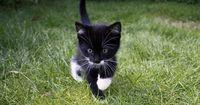 Merkwürdige Sachen, die Katzen machen