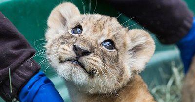 Zoos im Wettstreit: Wer hat das niedlichste Tier?