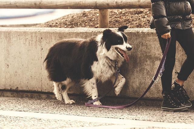 Wieder wurden Hunde Opfer von Giftködern
