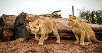 Jäger finden neue Methode zur Wilderei