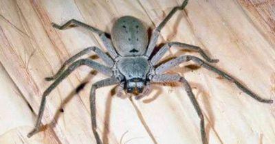 Er steht plötzlich vor Hunderten Spinnenbabys