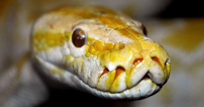 Die Haut dieser Schlange lächelt einen an