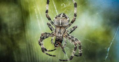 So viele Insekten fressen Spinnen jährlich
