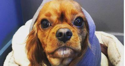 Das ist der wohl süßeste Hundefriseur