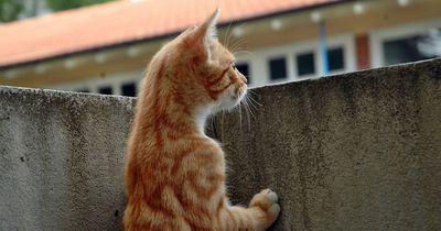 So steigerst du die Lebenserwartung deiner Katze