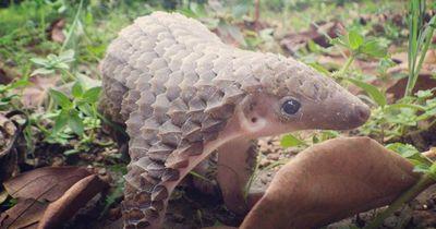 Diese Tierbabys hast du bestimmt noch nie gesehen: