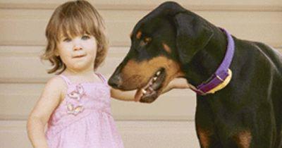 Was dieser Hund macht, um ein Baby zu retten ist herzergreifend