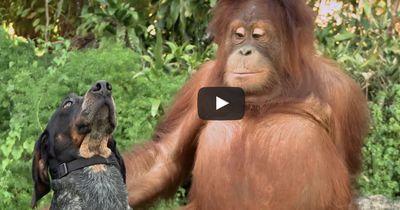 Das Video dieser Tierfreundschaft macht die Welt zu einem besseren Ort