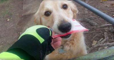 Post für den Hund: Wenn der Bote den Kläffer liebt!